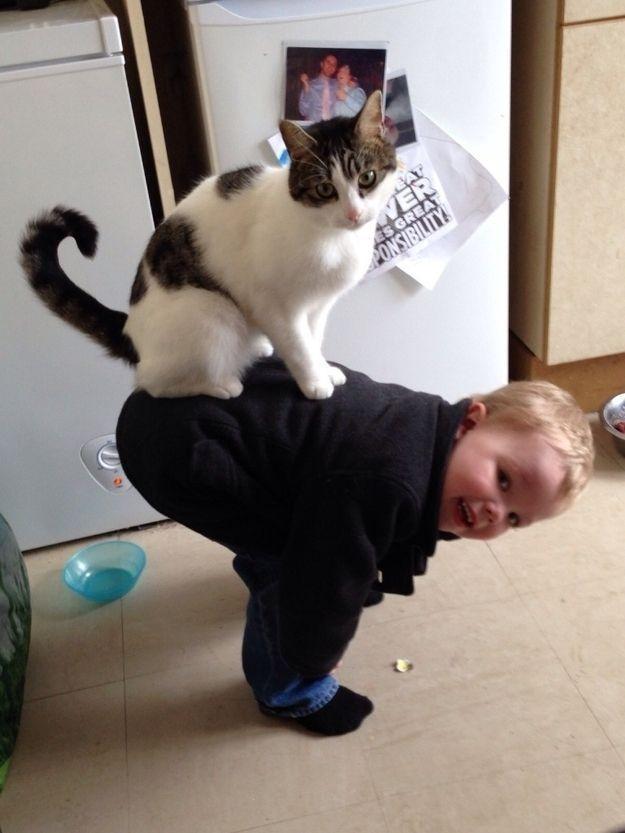 CatsGoldenHearts18 Преданные кошки с золотым сердцем