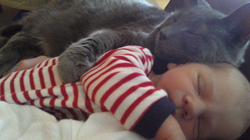 CatsGoldenHearts19 Преданные кошки с золотым сердцем