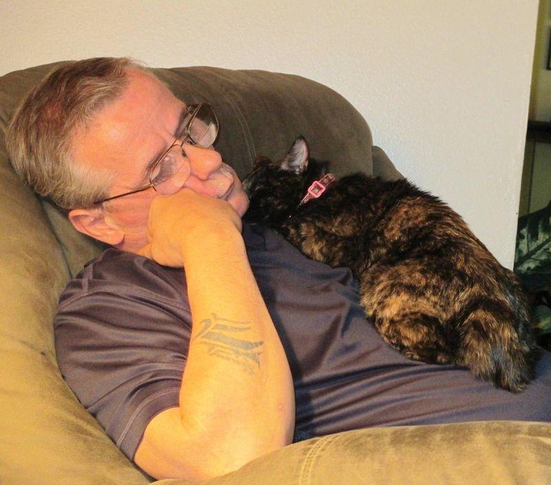 CatsGoldenHearts20 Преданные кошки с золотым сердцем
