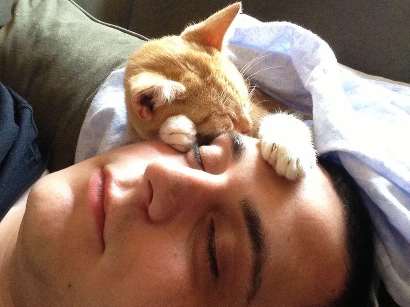 CatsGoldenHearts22 Преданные кошки с золотым сердцем