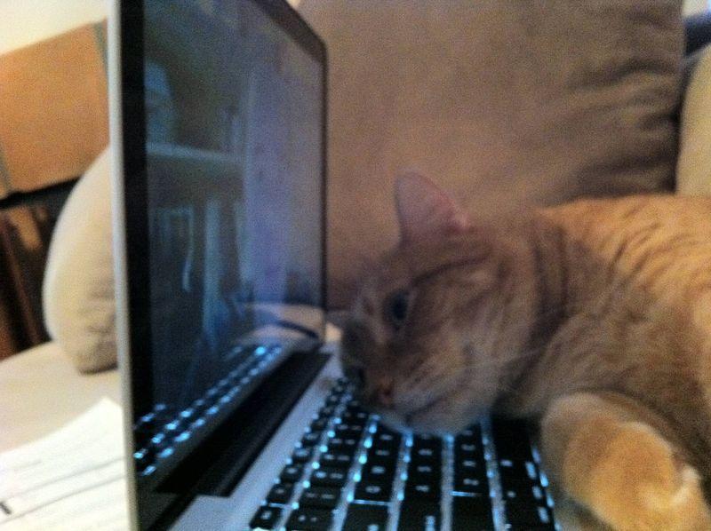 CatsGoldenHearts24 Преданные кошки с золотым сердцем