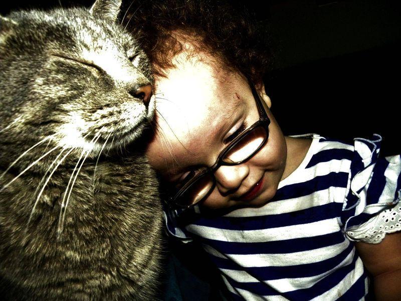 CatsGoldenHearts27 Преданные кошки с золотым сердцем
