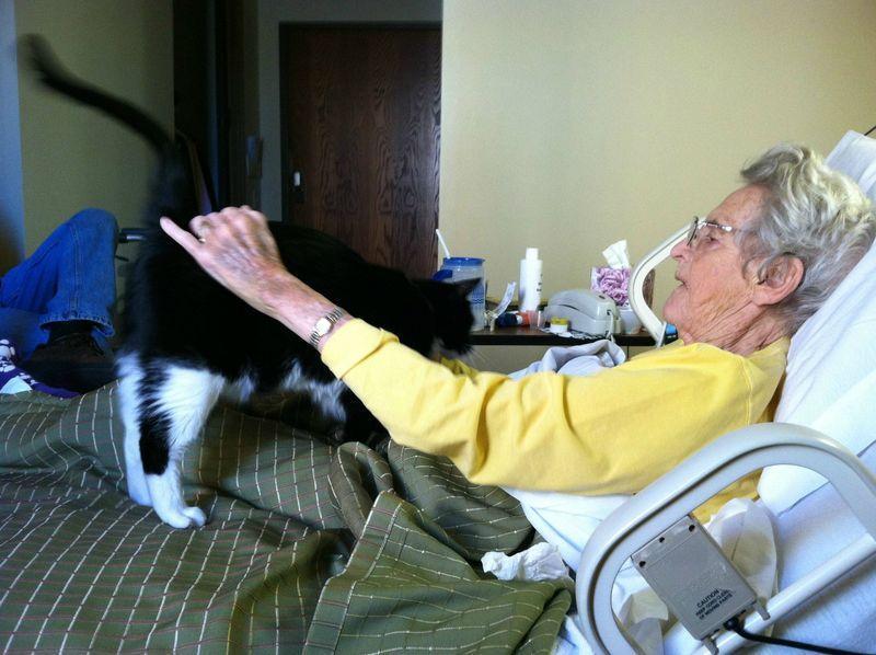 CatsGoldenHearts28 Преданные кошки с золотым сердцем