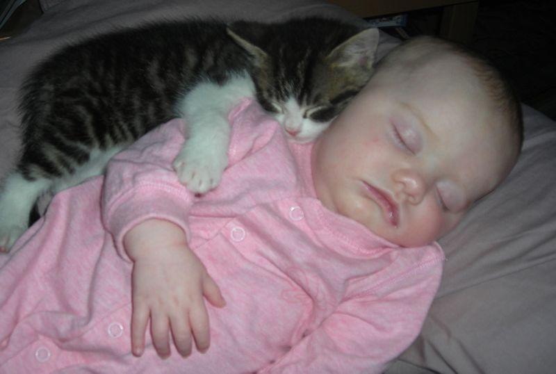 CatsGoldenHearts29 Преданные кошки с золотым сердцем