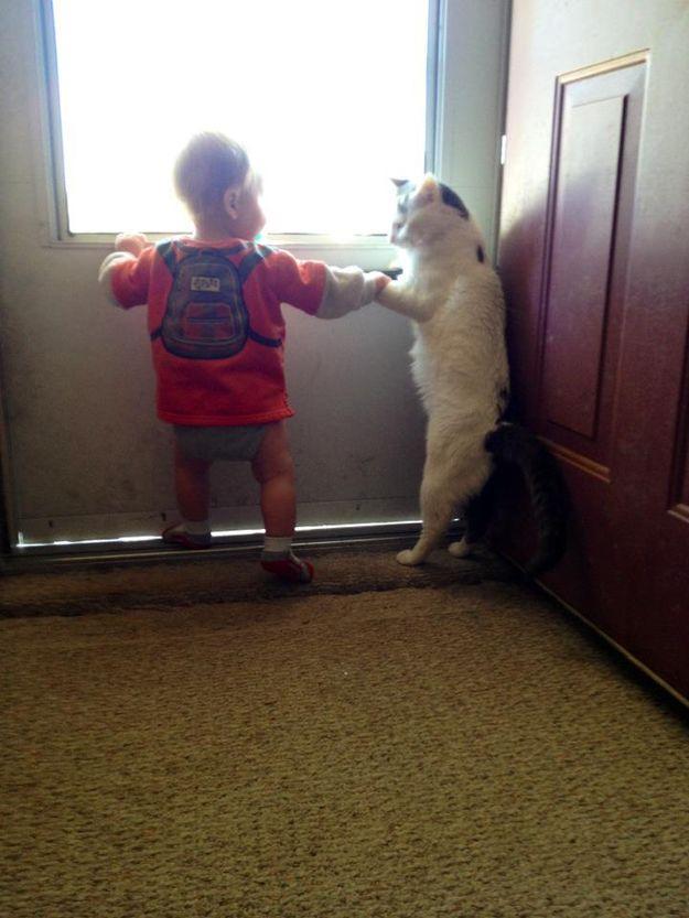 CatsGoldenHearts31 Преданные кошки с золотым сердцем