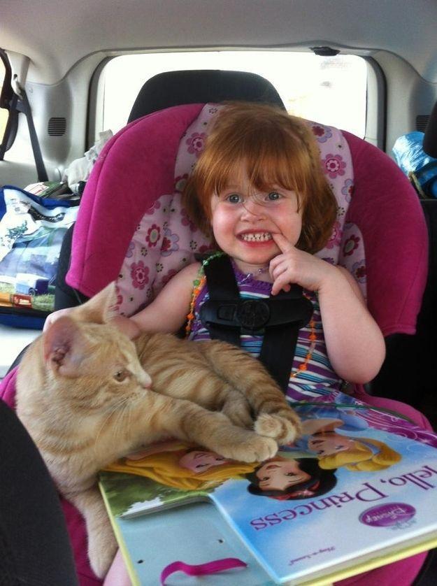 CatsGoldenHearts32 Преданные кошки с золотым сердцем