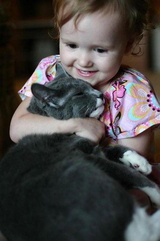 CatsGoldenHearts33 Преданные кошки с золотым сердцем