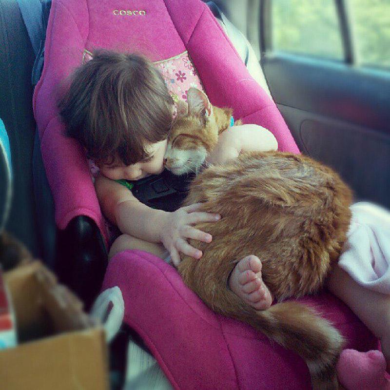 CatsGoldenHearts35 Преданные кошки с золотым сердцем