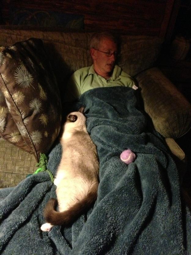 CatsGoldenHearts36 Преданные кошки с золотым сердцем