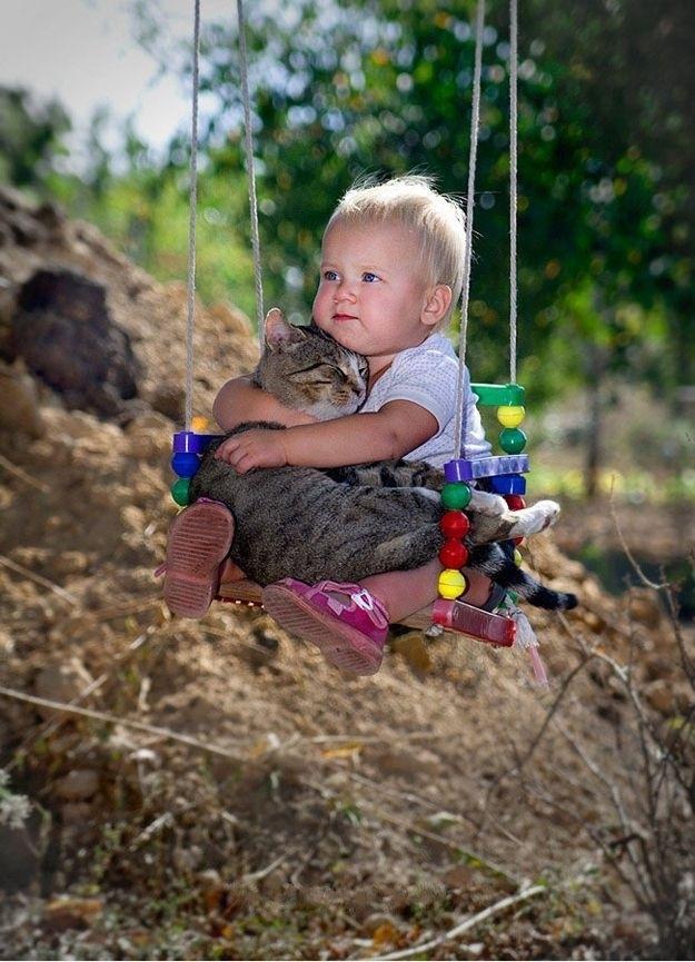 CatsGoldenHearts37 Преданные кошки с золотым сердцем