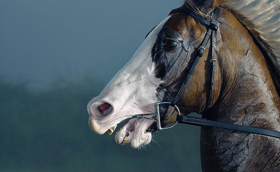 Horsei 28 Грация прекрасных лошадей в фотопроекте Equus