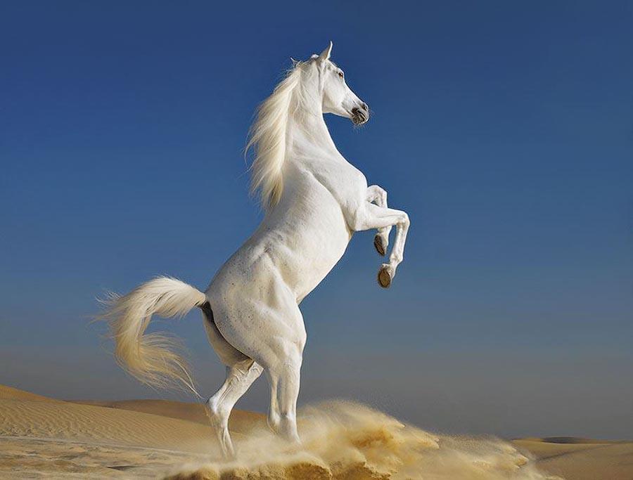 Horsei 30 Грация прекрасных лошадей в фотопроекте Equus