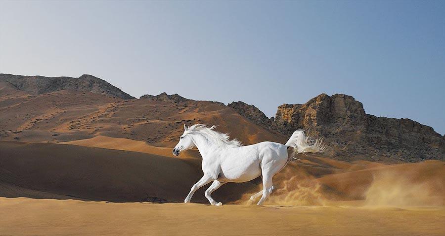 Horsei 4 Грация прекрасных лошадей в фотопроекте Equus