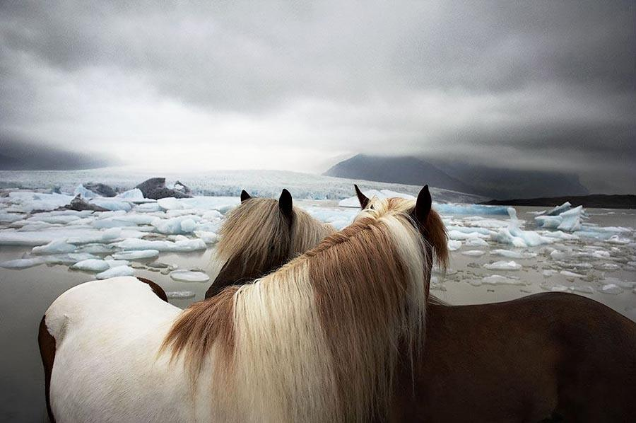 Horsei 5 Грация прекрасных лошадей в фотопроекте Equus