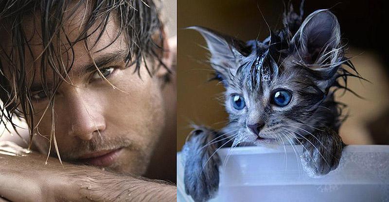 MenandCats11 Мужчины и котики