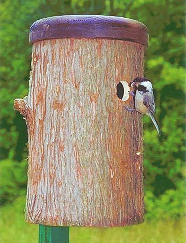 Parus04 Как помочь птицам перезимовать
