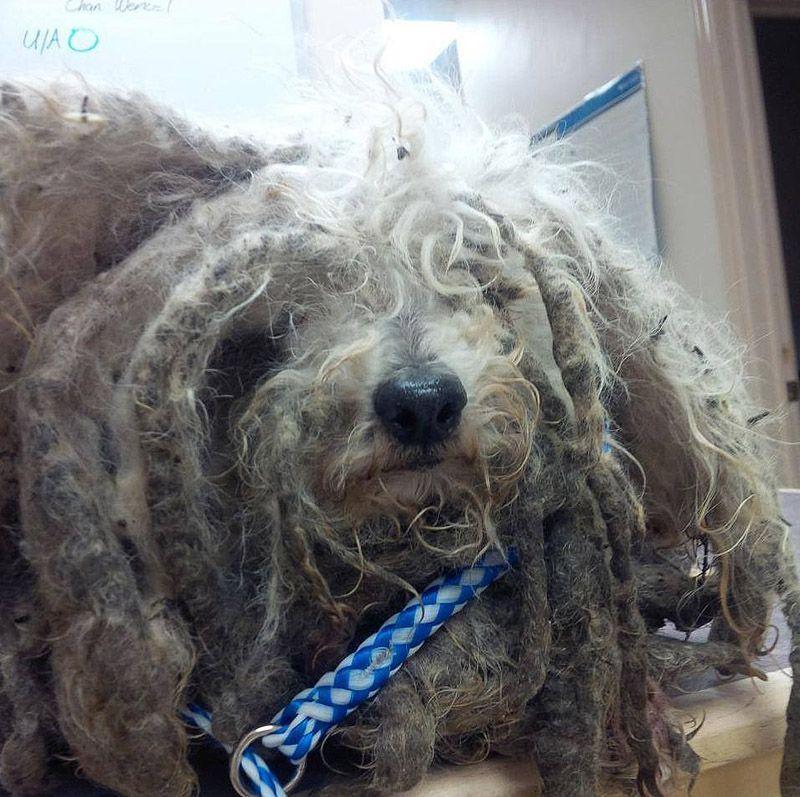 История Шрека — брошенный пес, который нашелдом