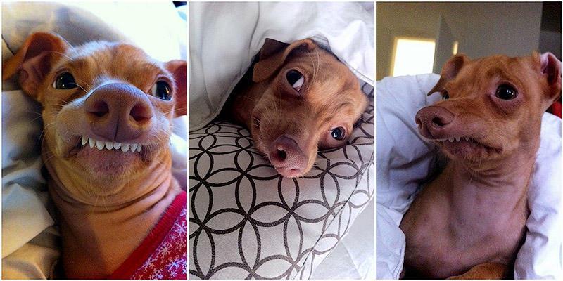 Туна — собачка, которая растопит ваше сердце