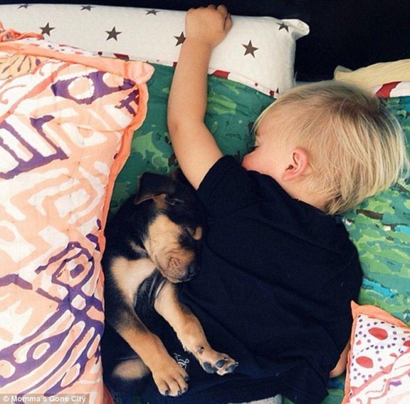 TheoBeau03 Тео и Бо   самые милые сони на свете