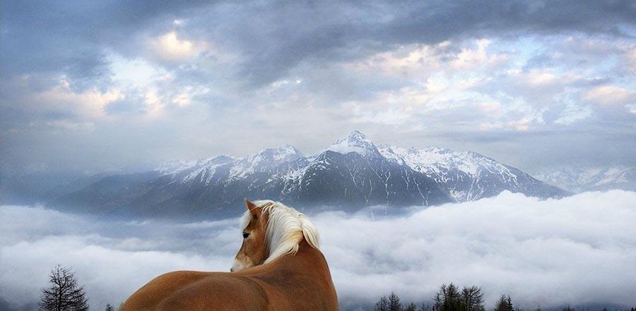 Tim Flae Грация прекрасных лошадей в фотопроекте Equus