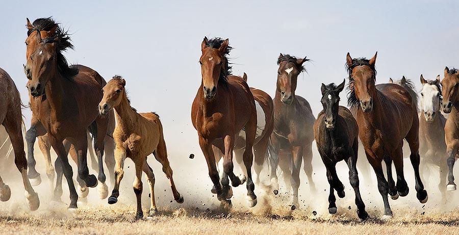 Tim Flah Грация прекрасных лошадей в фотопроекте Equus