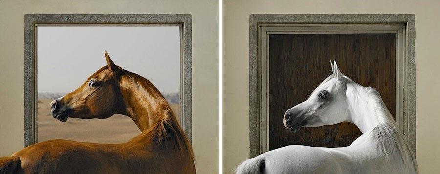 Tim Flaj Грация прекрасных лошадей в фотопроекте Equus
