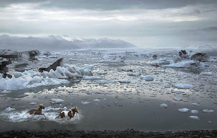 Tim Flan Грация прекрасных лошадей в фотопроекте Equus