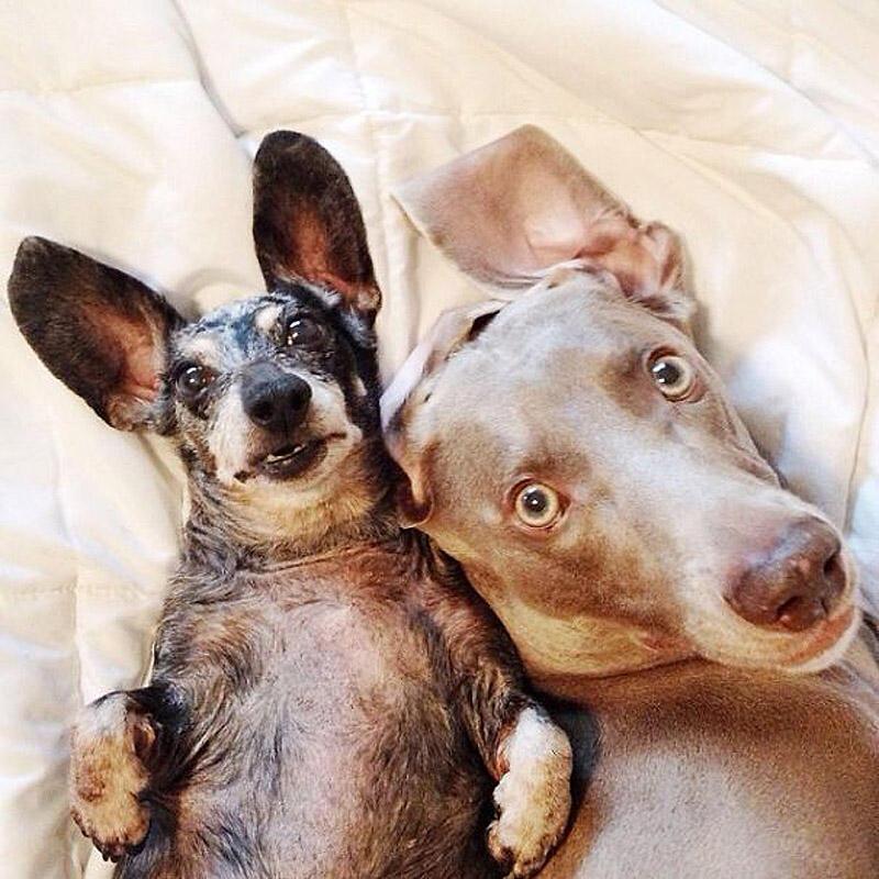 bffdogs03 Как животные становятся звездами интернета