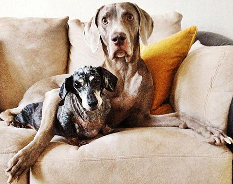 bffdogs05 Как животные становятся звездами интернета