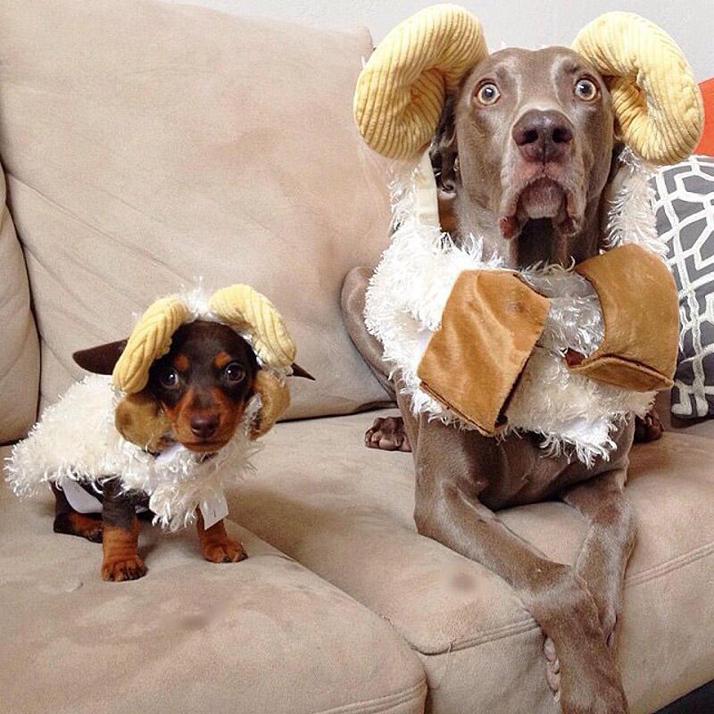 bffdogs10 Как животные становятся звездами интернета