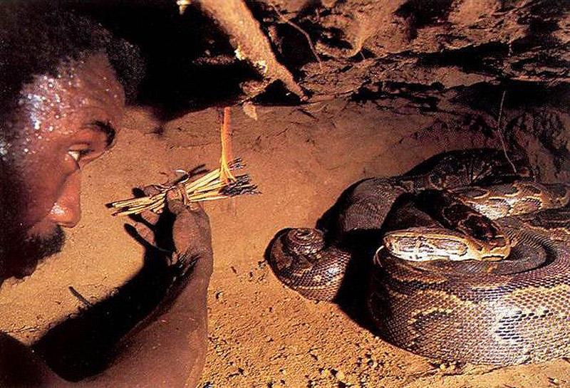 люди ловят змей