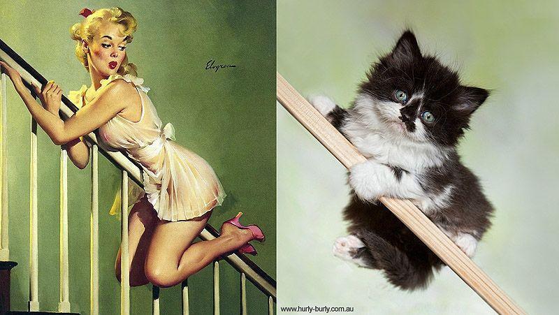 Кошки и девушки в стиле пинап