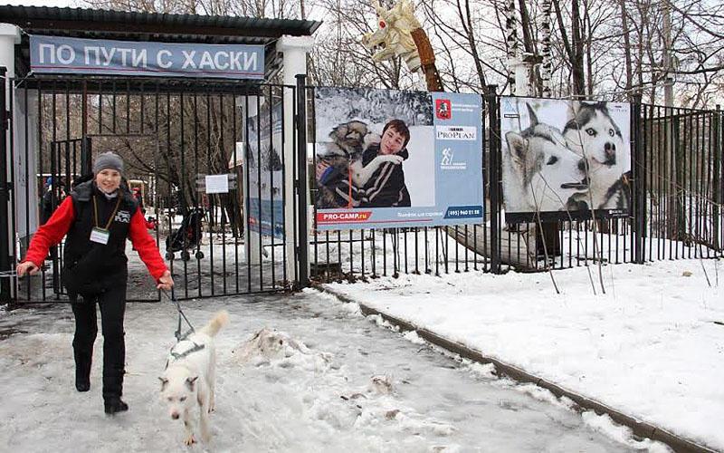 115 Хаски терапия в парке «Сокольники»