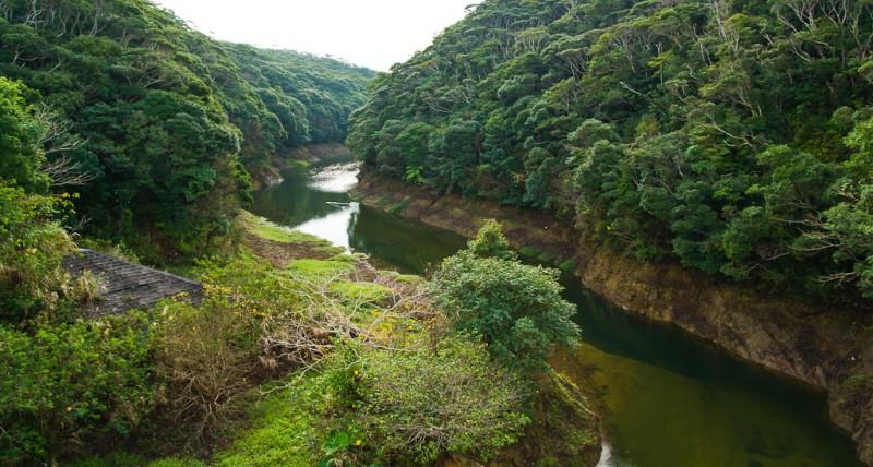 Beautiful-Yanbaru-Mangrove-Forest-