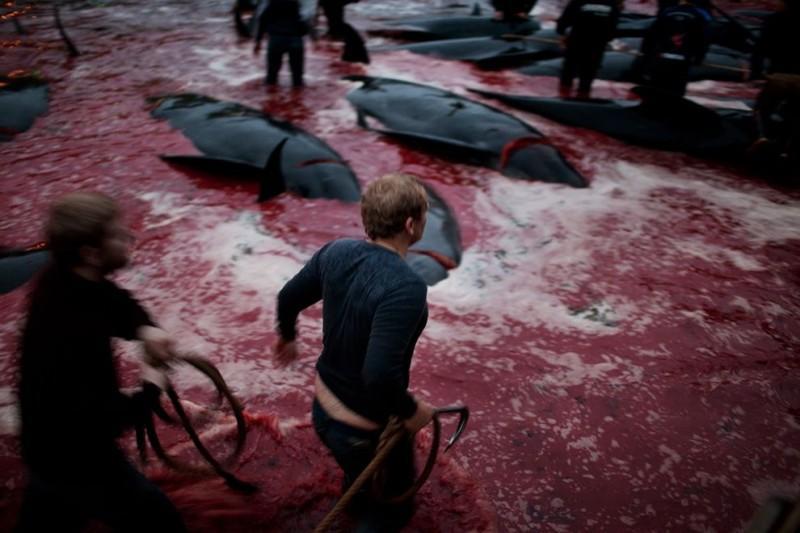 Житель Фарерских островов пытается оправдать жестокость убийства китов