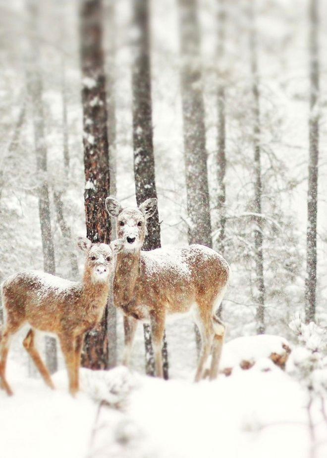WinterLandscapes14 Восхитительные зимние пейзажи