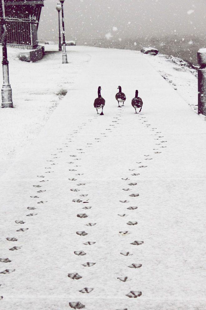 WinterLandscapes20 Восхитительные зимние пейзажи