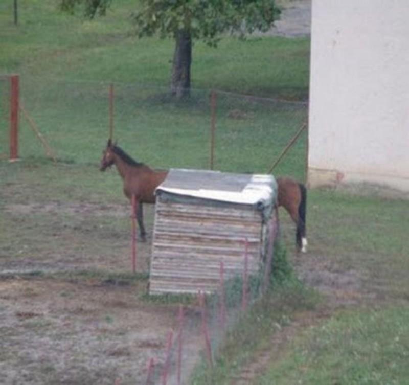 17. Таксо-лошадка.