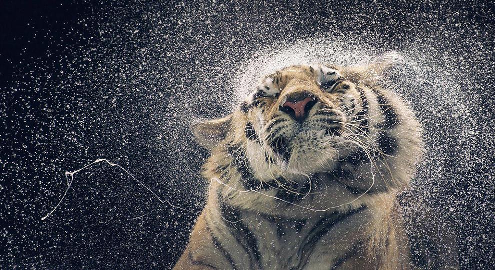 scientific07 Самые невероятные научные фотографии уходящего года