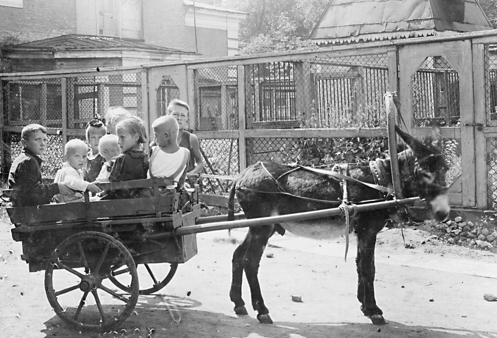 spbzoo03 Как ленинградский зоопарк пережил блокаду