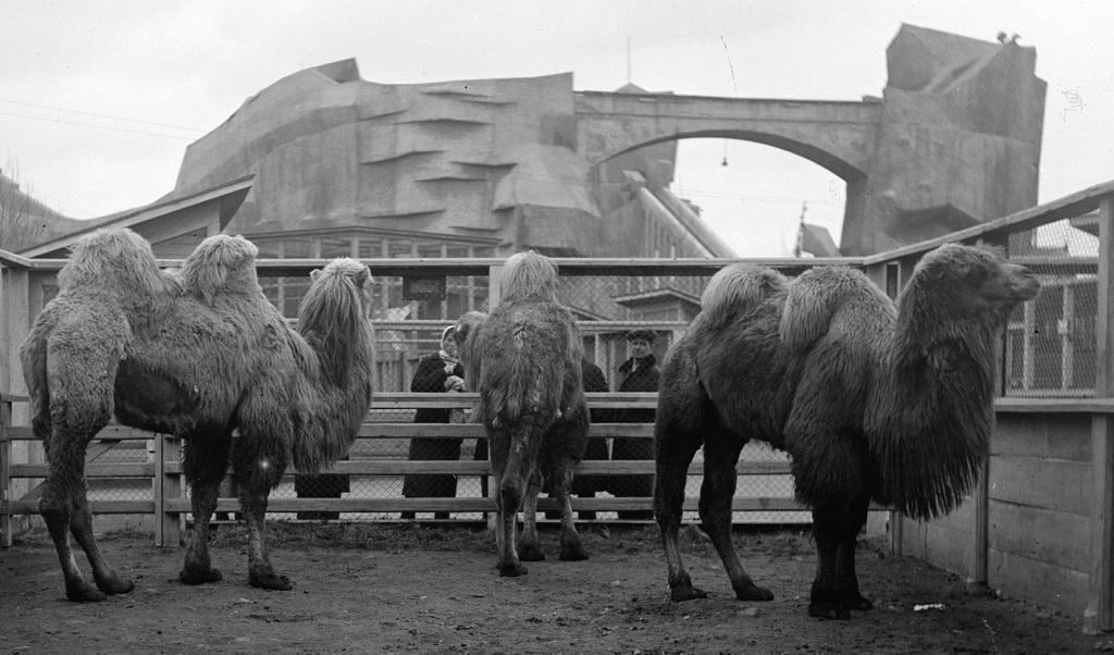 spbzoo10 Как ленинградский зоопарк пережил блокаду