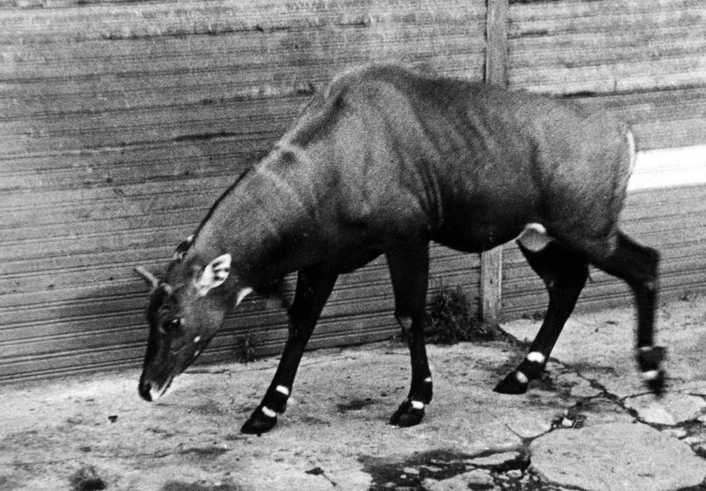 spbzoo12 Как ленинградский зоопарк пережил блокаду