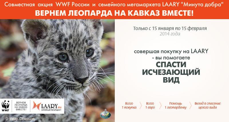 1 sohranim leopardov 800х427 1 Уникальный представитель исчезающего вида