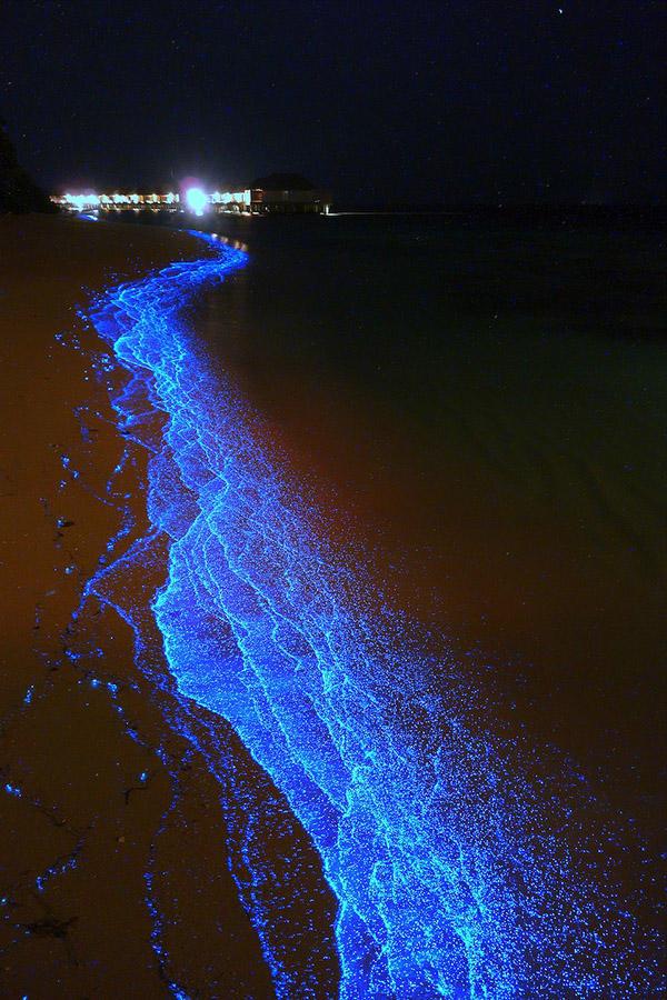 BioluminescentBeaches08 Красота светящихся пляжей, подобных звездному небу