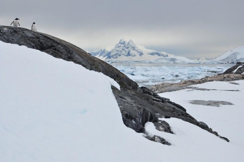 BoothPortCharcot20 800x531 Антарктида: Остров Booth, бухта Port Charcot