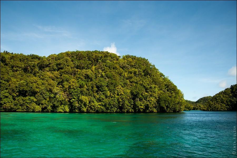 JellyfishLake03 30 фотографий озера, которое переполнено медузами
