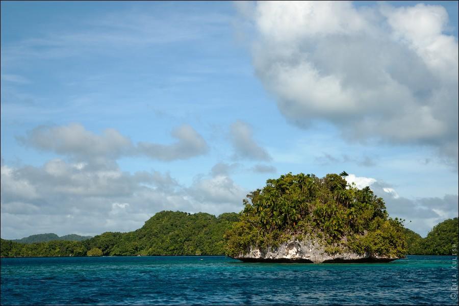 JellyfishLake05 30 фотографий озера, которое переполнено медузами