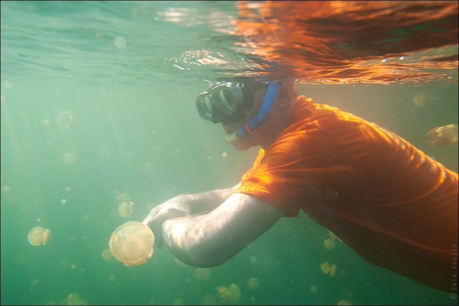 JellyfishLake22 30 фотографий озера, которое переполнено медузами