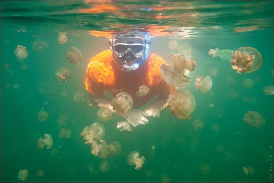 JellyfishLake26 30 фотографий озера, которое переполнено медузами