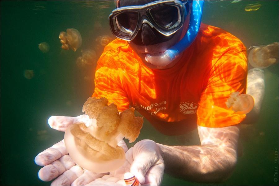 JellyfishLake27 30 фотографий озера, которое переполнено медузами
